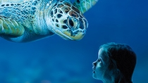 Excursion en bord de mer à Sydney : billet coupe-file pour l'aquarium SEA LIFE de Sydney, ...