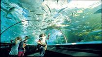 Manly SEA LIFE Sanctuary Entrance Ticket