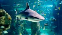 Snorkel with Sharks at SEA LIFE Sydney Aquarium, Sydney, Half-day Tours