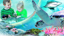 Sydney Attractions Pass: SEA LIFE Aquarium, Sydney Tower Eye, WILD LIFE Zoo och Madame Tussauds, ...