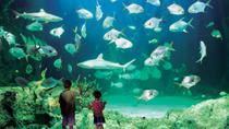 Sydney Pass : Aquarium SEA LIFE, Sydney Tower Eye, WILD LIFE Sydney, croisière dans le port de ...