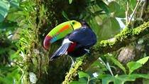 Bird Watching Tour at Hanging Bridges Park, La Fortuna, Nature & Wildlife