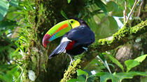 Birdwatching Tour at Mistico Arenal Hanging Bridges Park, La Fortuna, Nature & Wildlife