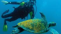 Scuba Diving in Rio de Janeiro, Rio de Janeiro, Scuba Diving