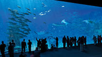 Entrance Ticket to the NAUSICAA, the biggest aquarium in Europe, Lille, Attraction Tickets