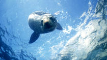 Seal Swimming Tour from Kaikoura, Kaikoura, Nature & Wildlife