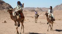 Camel Riding Adventure from Sharm El Sheikh, Sharm el Sheikh, Nature & Wildlife