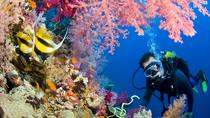 Intro Diving and Snorkeling day Trip, Sharm el Sheikh, Day Trips