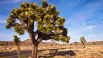 Joshua Tree National Park Jeep Adventure, Palm Springs, Bike & Mountain Bike Tours