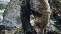 Grizzly Bears Of The Wild: A First Nations Wildlife Journey into the Great Bear Rainforest, British ...