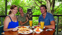 Breakfast with the Koalas at Hartley's Crocodile Adventures from Cairns or Palm Cove, Cairns og det ...