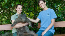 Zootastic Experience at Hartley's Crocodile Adventure from Cairns or Palm Cove, Cairns & the ...