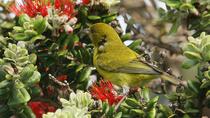 Oahu Endemic Species Birding Adventure, Oahu, 4WD, ATV & Off-Road Tours