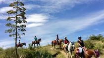 Exotic Flora Full Day Ride, Oaxaca, Nature & Wildlife