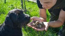Slovenian Truffle Hunting Experience, Koper, Food Tours
