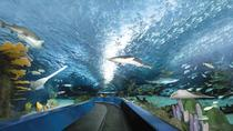 Ripley's Aquarium Myrtle Beach Admission