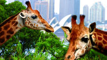 3-daagse Sydney Harbour hop-on hop-off cruise-pas inclusief toegang tot Taronga Zoo, Sydney, Dagcruises