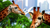 3-Day Sydney Harbour Hop-On Hop-Off Cruise Pass con ingresso al Taronga Zoo incluso, Sydney