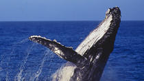 Sydney Whale-Watching Cruise, Sydney, Dolphin & Whale Watching