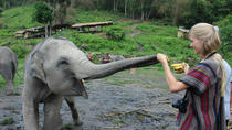 Full Day Visit to Elephant Jungle Sanctuary in Chiang Mai, Chiang Mai, Nature & Wildlife