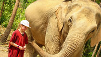 Half-Day Afternoon Visit to Elephant Jungle Sanctuary in Chiang Mai, Chiang Mai, Nature & Wildlife