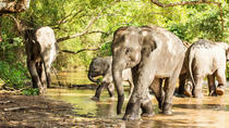 Half-Day Afternoon Visit to Elephant Jungle Sanctuary in Phuket, Phuket, Nature & Wildlife