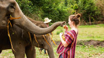 Half-Day Morning Visit to Elephant Jungle Sanctuary in Chiang Mai, Chiang Mai