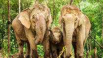 Half-Day Morning Visit to Elephant Jungle Sanctuary in Phuket, Phuket, Nature & Wildlife