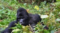 2days Gorilla Tracking Rwanda, Kigali, Multi-day Tours