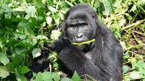 3 day Gorilla Tracking Rwanda, Kigali, Multi-day Tours