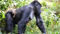 4 Days Gorilla Tracking and Queen Elizabeth National Park Safari, Kampala, Multi-day Tours