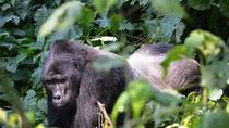 5 Days Gorillas and Wildlife Safari, Kampala, Multi-day Tours