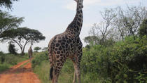 Lake-Mburo-Nationalpark Safari-Tagestour ab Kampala, Kampala, Safaris