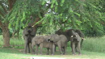 The 3 day Murchison Falls National Park safari andTour, Kampala, Attraction Tickets