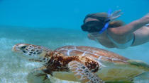 Cozumel Shore Excursion: Akumal Bay and Yal Ku Lagoon Snorkel and Sea Turtle Adventure, コスメル