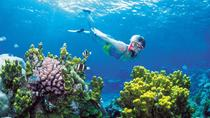 Snorkel, ATV, Zipline and Cenote Adventure from Cancun, Cancun, Snorkeling
