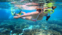 Snorkel Tour to Puerto Morelos from Cancun, Cancun, Snorkeling