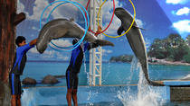 Pattaya Dolphin World, Pattaya, Cultural Tours