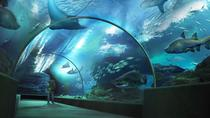 SEA LIFE Bangkok Ocean World Admission with Private Transfer, Bangkok, Theme Park Tickets & Tours