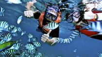 Snorkeling in Koh Tao and Nang Yuan Island by Speed boat, Koh Samui, Jet Boats & Speed Boats