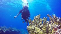 Private Half-Day Dive Charter, St Thomas, Other Water Sports