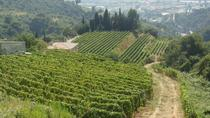 Provence Full Day Private Tour from Nice, Nice, Private Sightseeing Tours