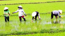 Authentic Mekong Private Day Tour, Ho Chi Minh City, Food Tours