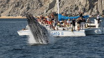 Whale Watching Tour in Los Cabos Aboard the Pez Gato, Los Cabos, Dolphin & Whale Watching