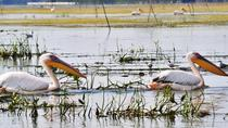 3 Days Private Tour - The Danube Delta for Bird Watching Lovers from Bucharest, Bucharest, Private ...