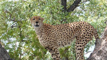3-Day Kruger Park Safari from Johannesburg or Pretoria, Johannesburg, Multi-day Tours