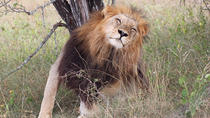4-Day Guided Kruger Park Adventure Safari from Johannesburg, Johannesburg, Multi-day Tours