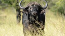 Open Vehicle Guided Day Drive from Kruger National Park