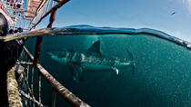 Private Shark Diving, Cape Town, Other Water Sports