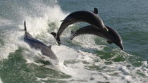 St. Pete Beach Dolphin Racer Speedboat Adventure, St Petersburg, Day Cruises